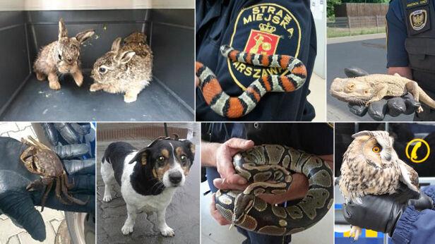Ekopatrol odłowił ponad 9 tys. zwierząt Eko Patrol Straży Miejskiej