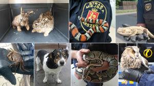 Od psów po pająki, węże i kraby. Rekordowy rok dla ekopatrolu