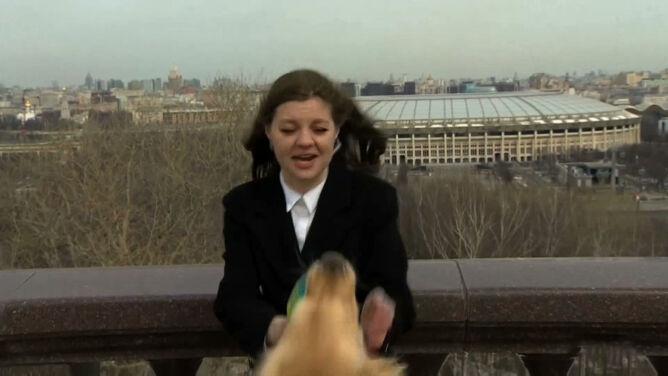 Pies wyrwał mikrofon prezenterce pogody. <br />W kilka dni stał się gwiazdą internetu