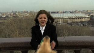 Pies wyrwał mikrofon prezenterce pogody. W kilka dni stał się gwiazdą internetu