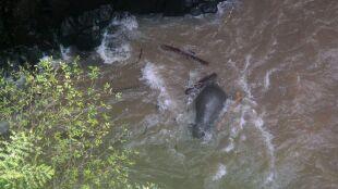 Znaleźli w wodospadzie kolejne martwe słonie. Z całego stada przeżyły tylko dwa