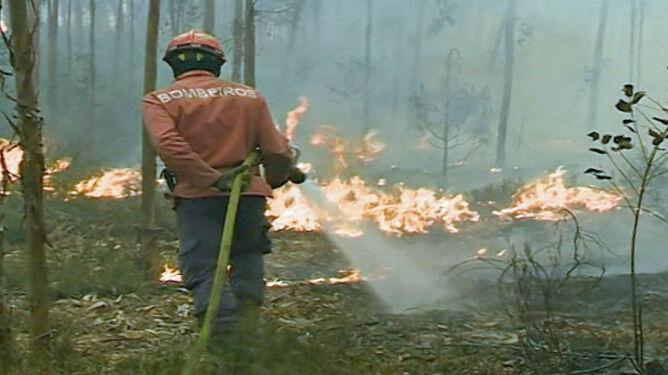 """Portugalia walczy z pożarami. Strażacy boją się, że silny wiatr """"rozsieje"""" ogień"""