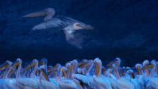 """""""Night of the pelicans"""" Greg du Toit, RPA"""